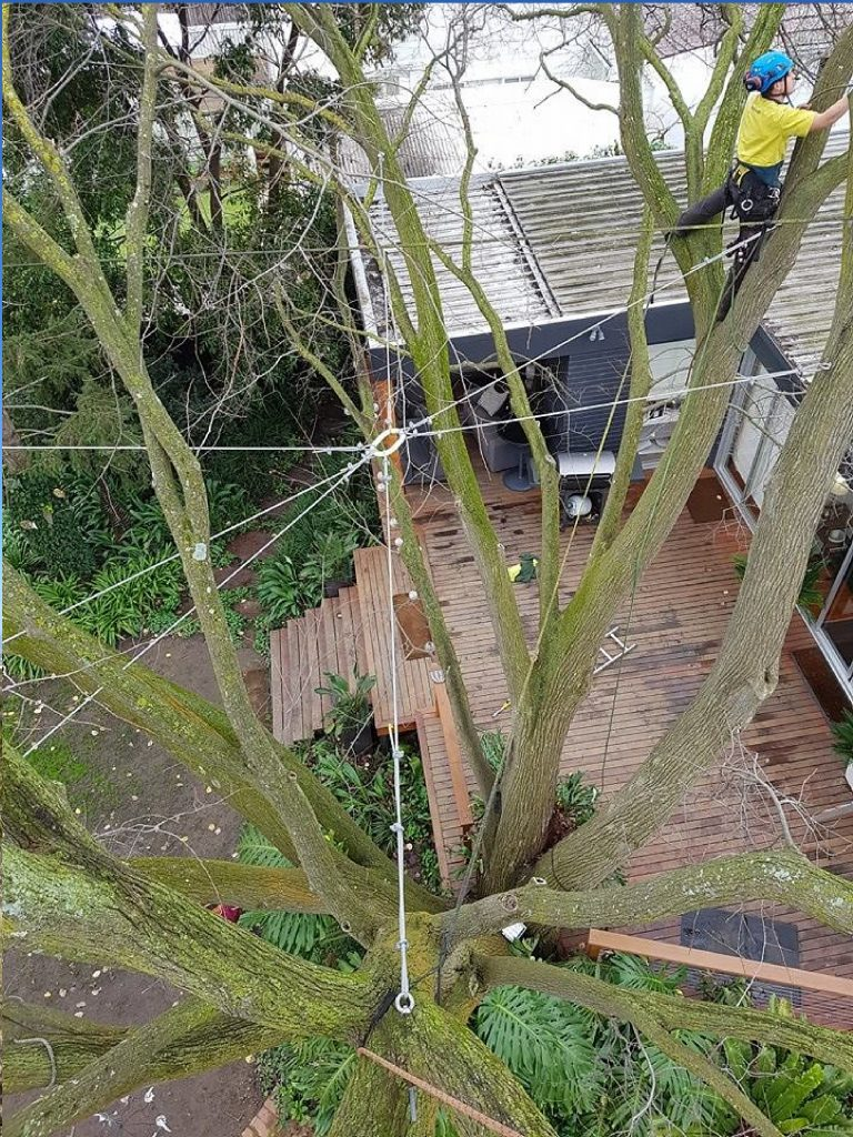 Tree Cabling and Bracing Corona Del Mar